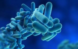 Legionella – Is Our Water Safe?